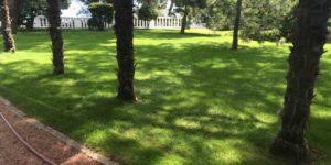 Красивый газон в парке